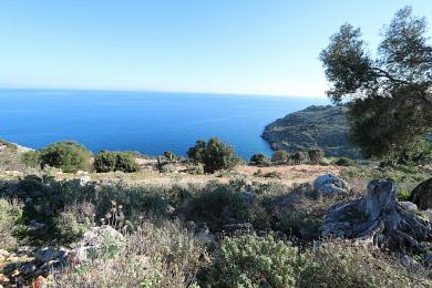 Agricultural Land Plot Sale - SKALA, MUNICIPALITY OF ELIOS - SOUTHEAS