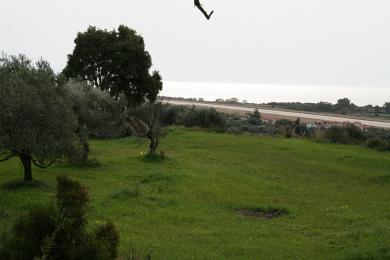 Agricultural Land Plot Sale - MINIES, MUNICIPALITY OF ARGOSTOLI - SOUT